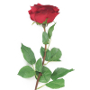 red roses to online, red roses bouquet to davao, red roses vase to davao