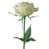 white roses to davao, buy white roses in davao