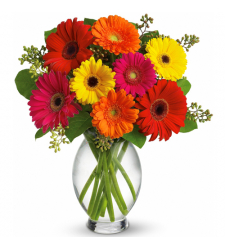 send 12 mixed color gerberas in vase to davao