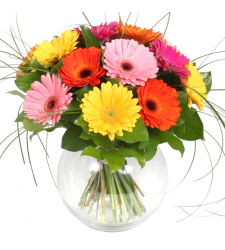 send 12 pcs. mixed gerberas in vase to davao